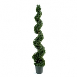 Arqitecture bois cypr s stabilis d coration feng for Plante feng shui