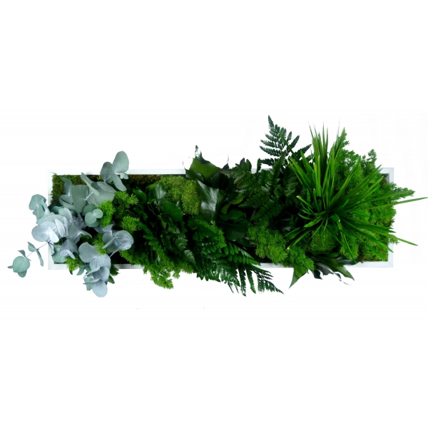 Pin cadre vegetal stabilise mono home plantes for Plante vegetal