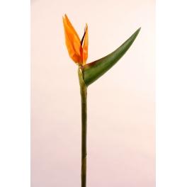 Fleur Oiseaux de paradis