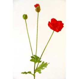 Fleur Coquelicot