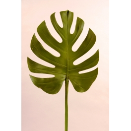 Feuille Monstera